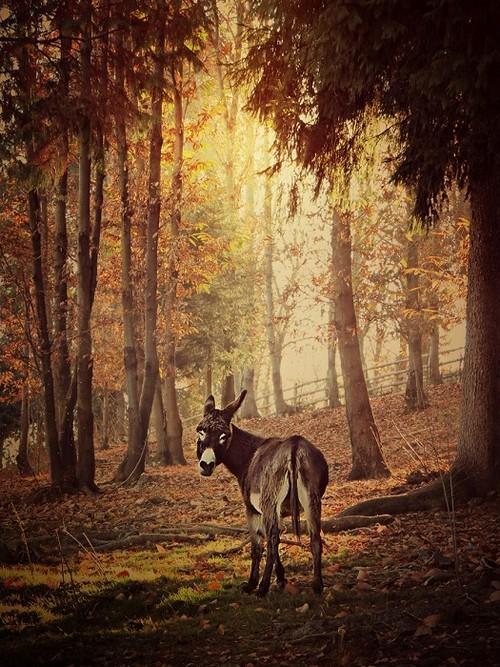 Трогательный ослик из питомника Сала-Бьеллезе в Северной Италии.