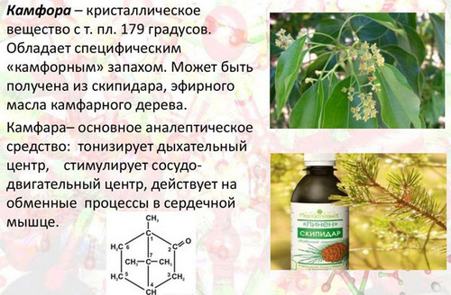Камфорне масло, в косметологии, и медицине