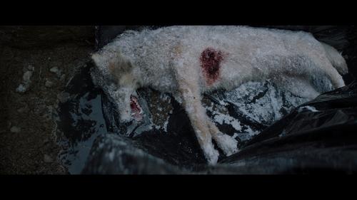 Мысленный волк, как главная провокация «Кинотавра»