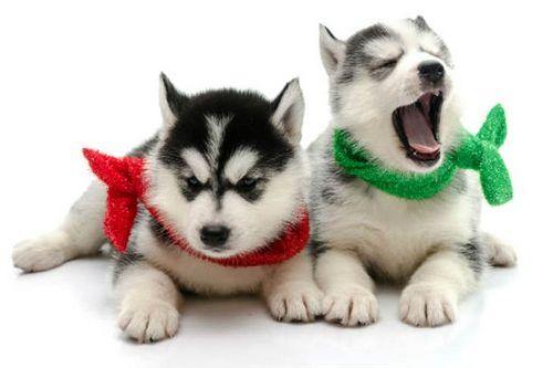 Рот собаки чище, чем рот человека