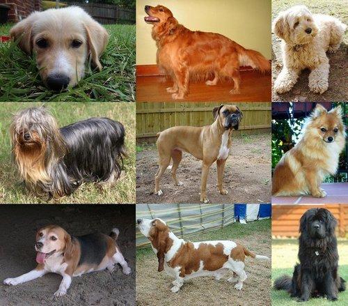 1 человеческий год равен 7 собачьим