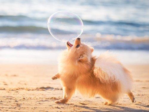 Сухой нос означает, что собака больна