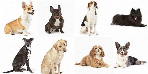 У домашних собак не бывает сердечного червя