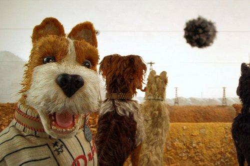 Собаки едят траву, когда болеют